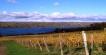 Seneca Lake Riesling